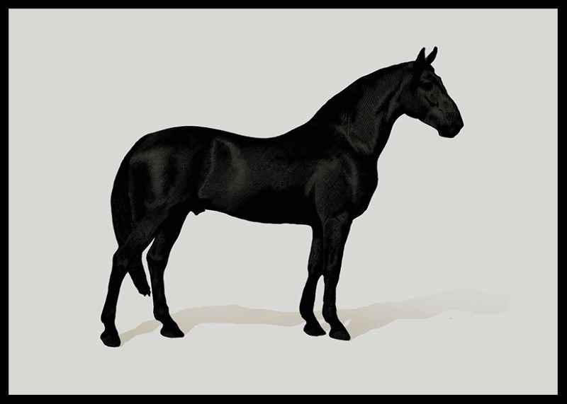 Black Horse Land. Drawing-0