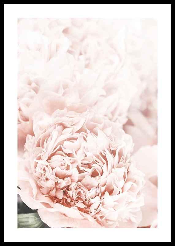 Loving Roses No1