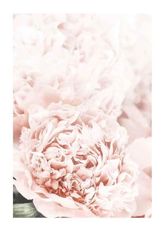 Loving Roses No1-1