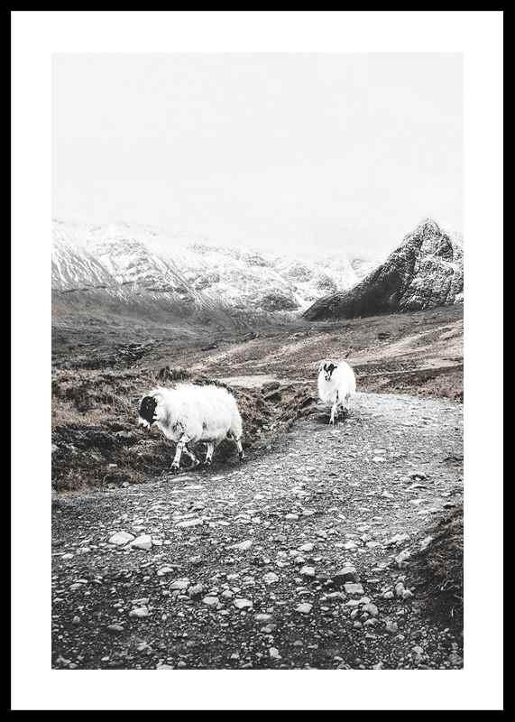 Winter Goats-0
