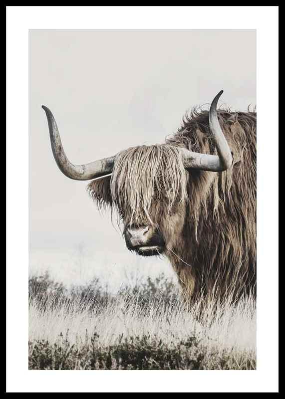 Winter Cow-0