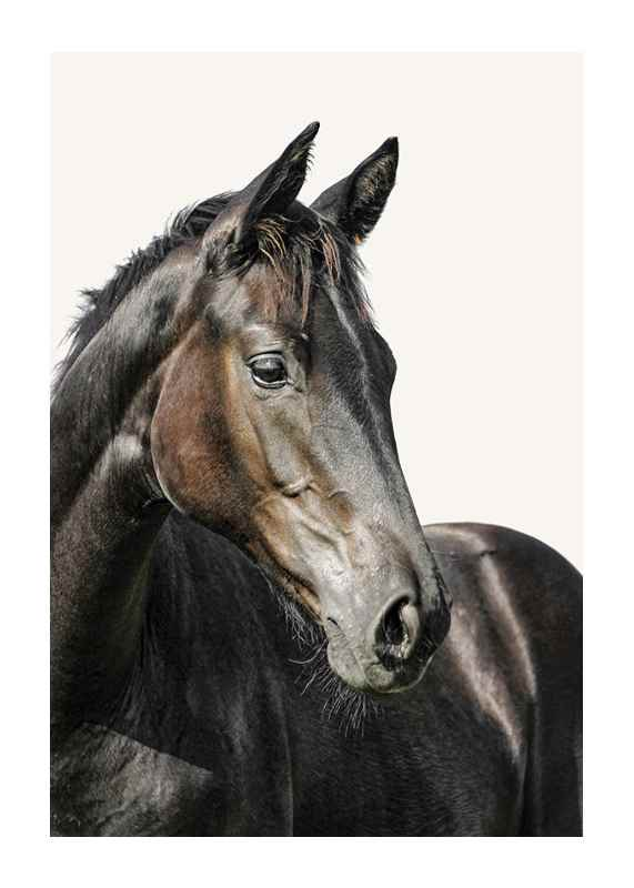 Brown Horse-1