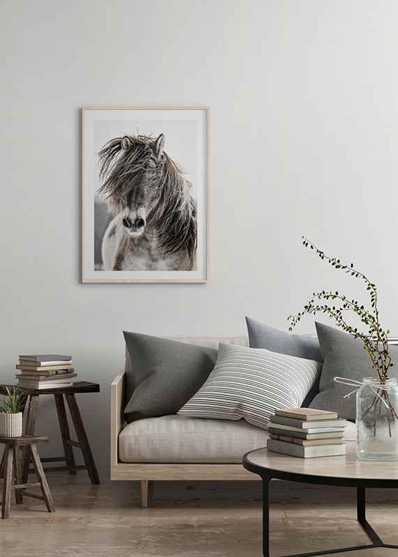 Wild Horse-4