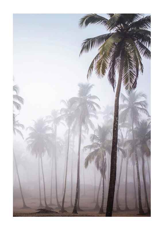 Palms In Haze-1