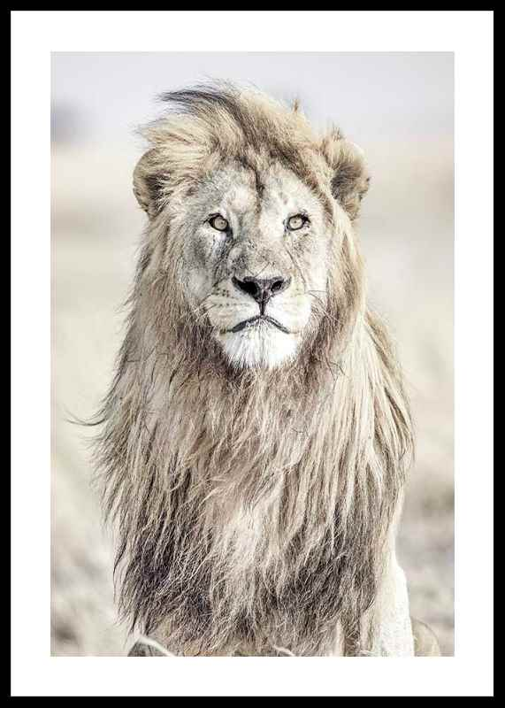 Majestic Lion Color