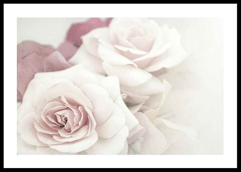Perfect Pair Roses