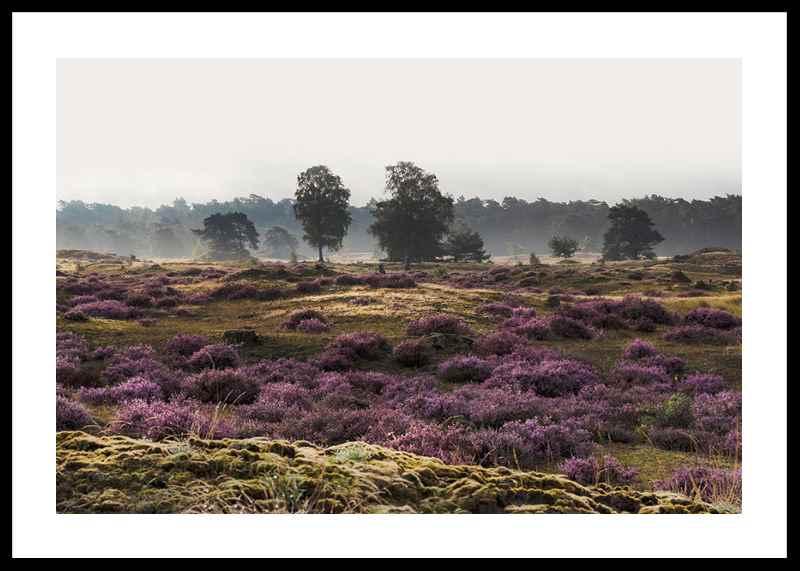 Veluwe Meadow-0