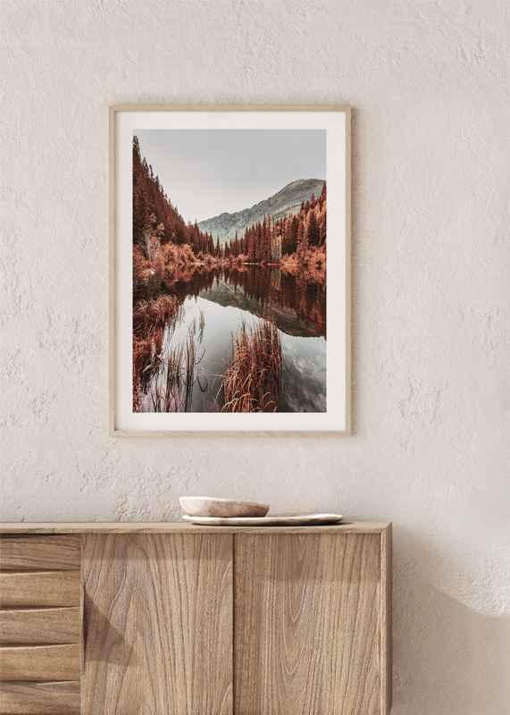 Colorado Forest-4