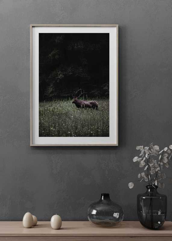 Deer in Nature-4