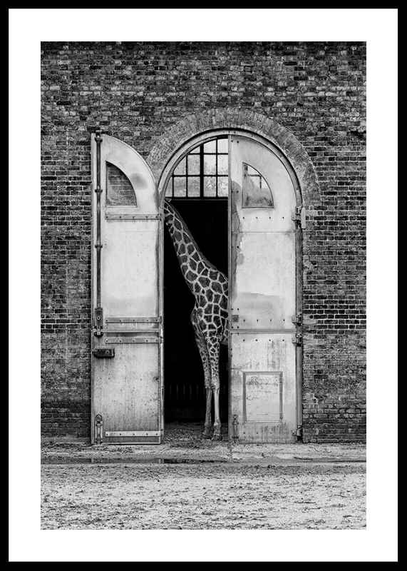 Hiding Giraffe