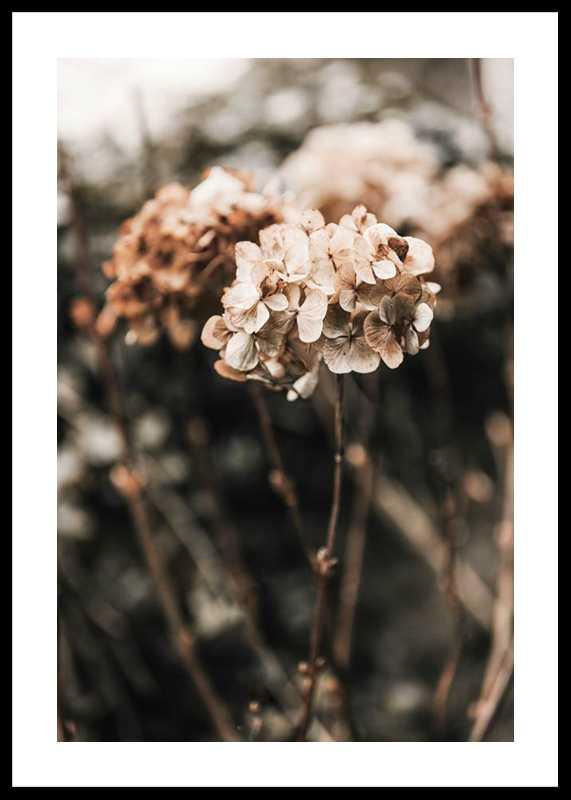 Hortensia Flower-0