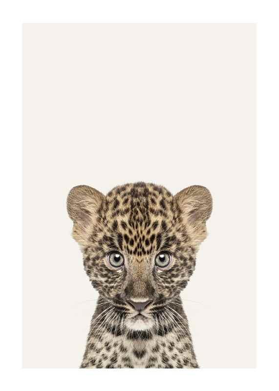 Baby Leopard-1