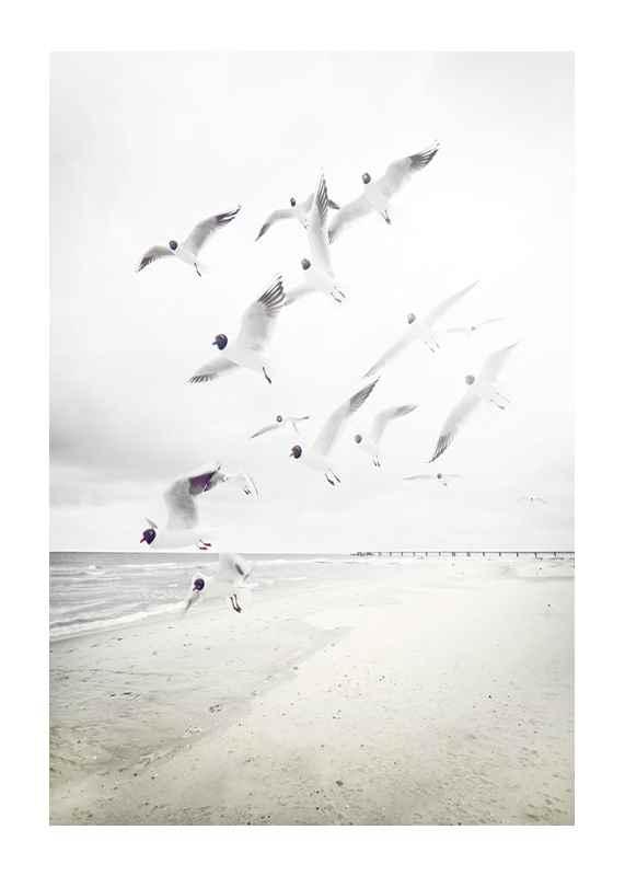 Black-Headed Seagulls-1