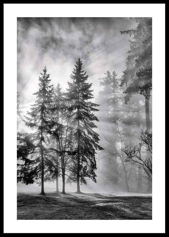Sunrays Through Trees-0
