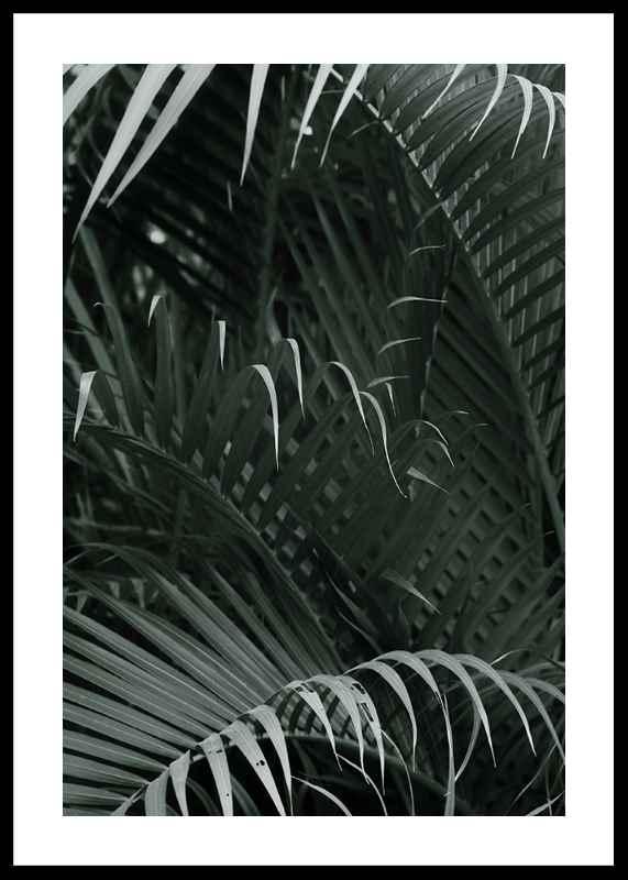 Palm Leaf No1