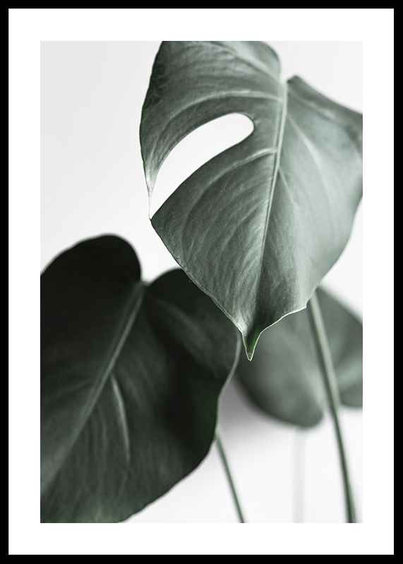 Green Leaves No1