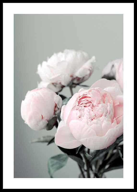Pink peonies No1