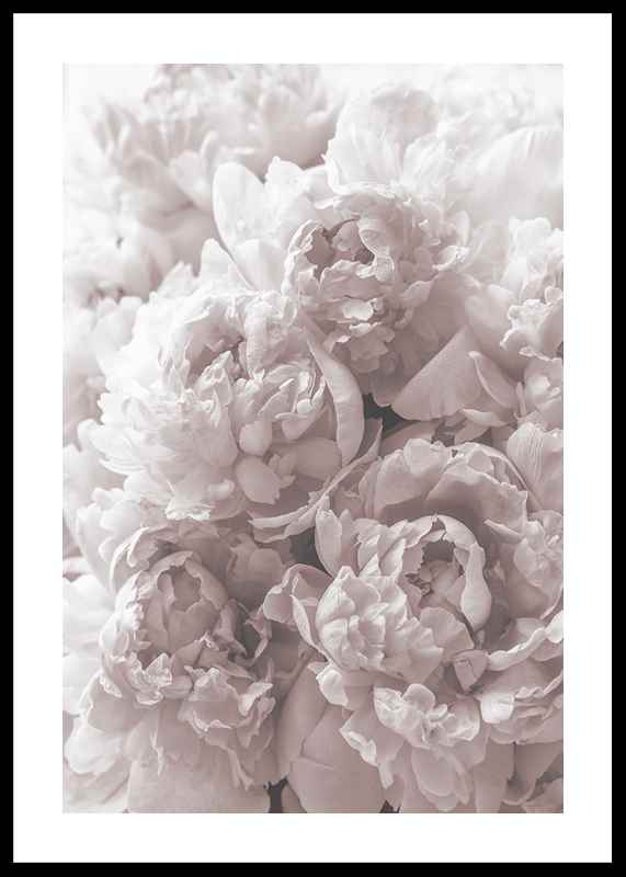 Bright Pink Roses No2