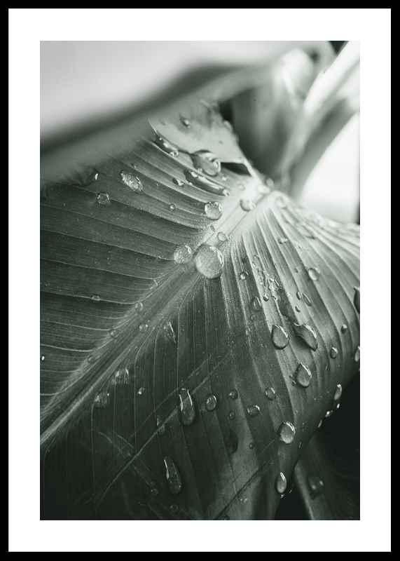 Palm Leaf Raindrops-0
