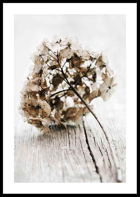 Dried Field Flower No1-0