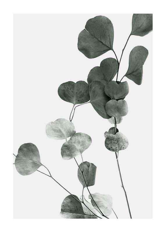 Eucalyptus No7-1