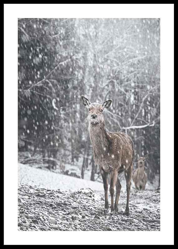 Deer In Snow-0