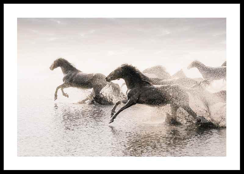 Wild Horses Running-0