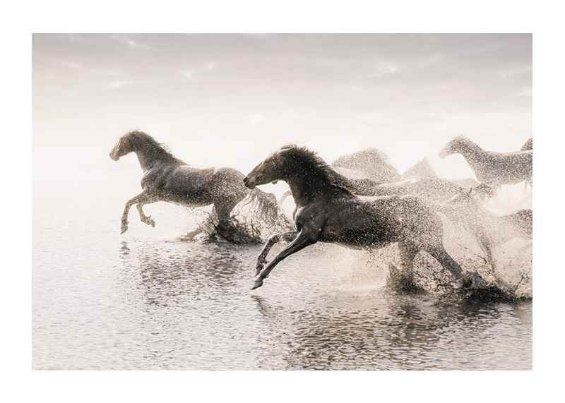 Wild Horses Running-1