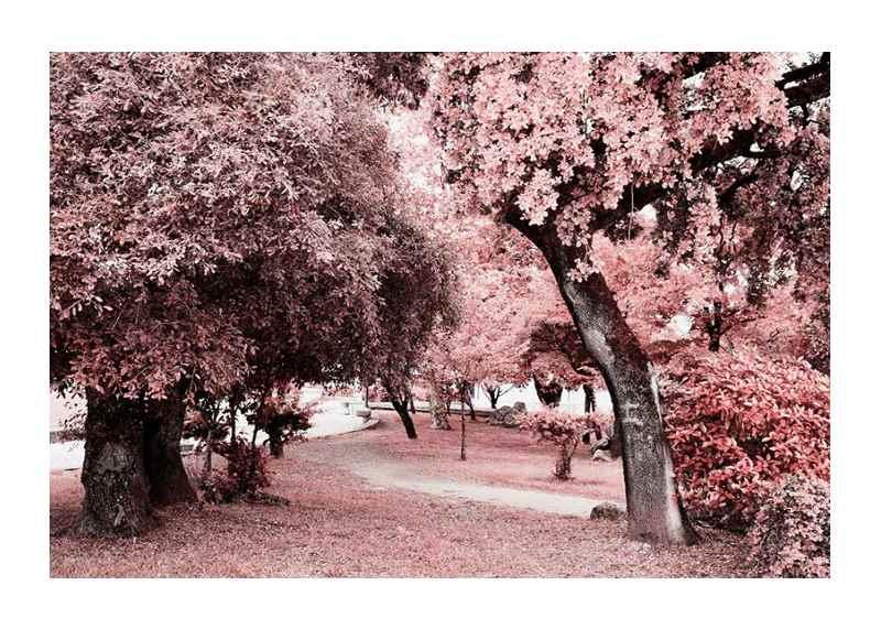 Pink Trees No1-1