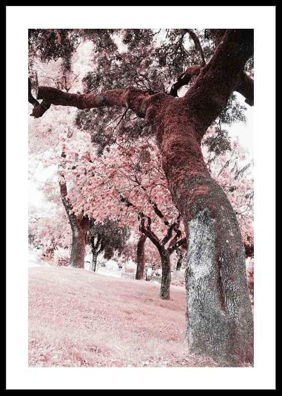 Pink Trees No2-0