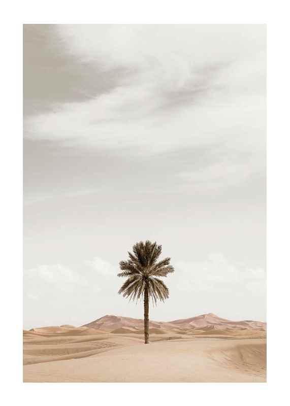 Palm Tree In Desert-1