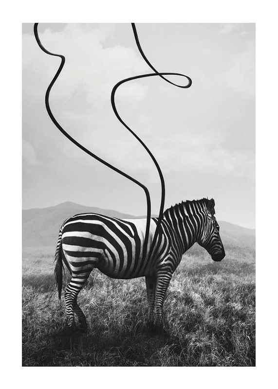 Abstract Zebra-1