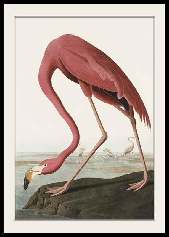 Flamingo 1827-0