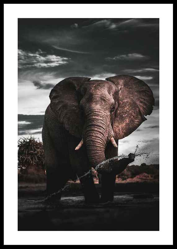 African Elephant-0