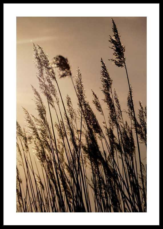 Swaying Reed-0