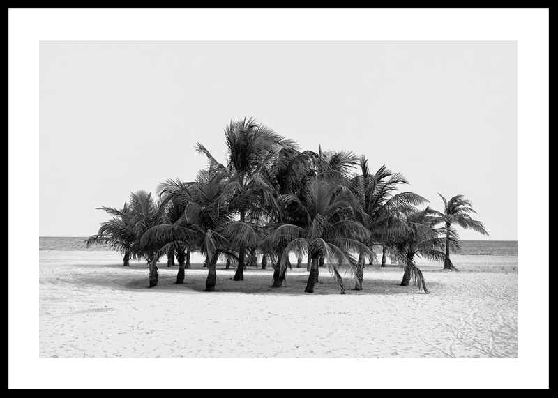 Group Of Palms