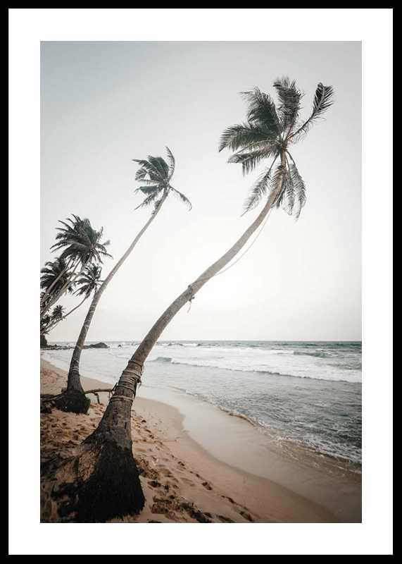 Beach Palm Trees-0
