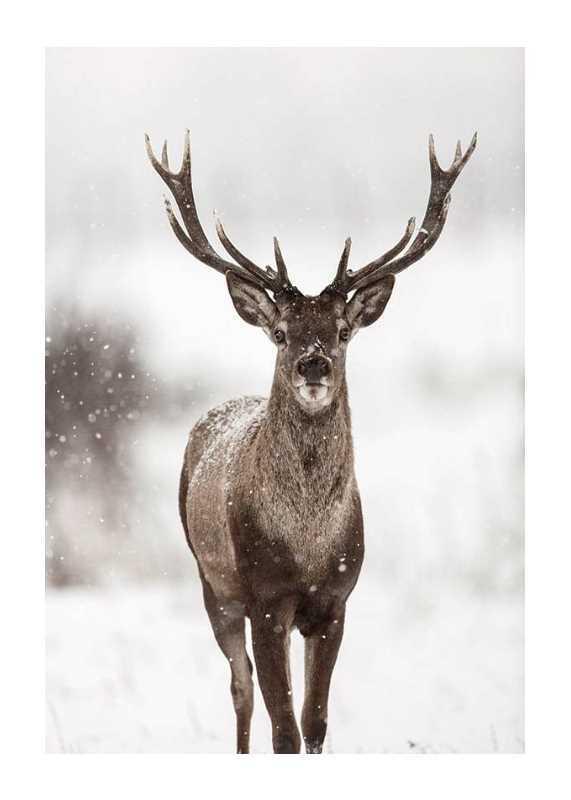 Majestic Red Deer -1