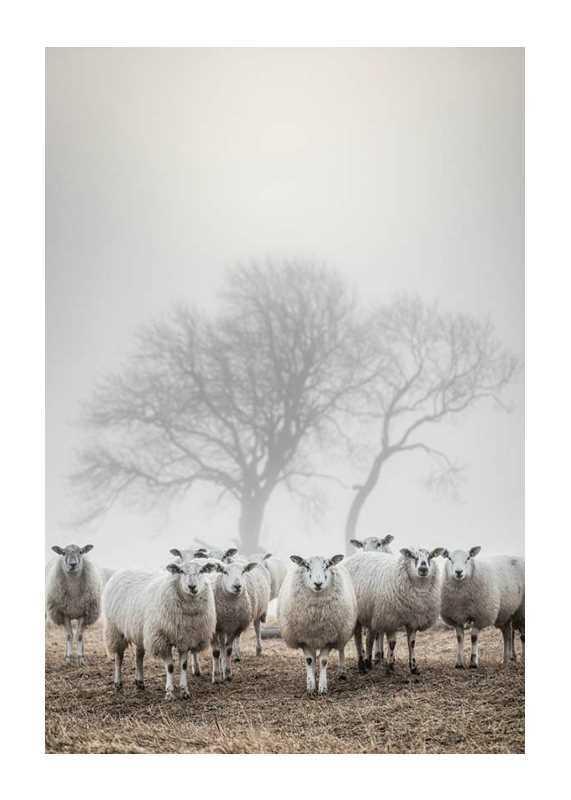 Sheep In Fog-1