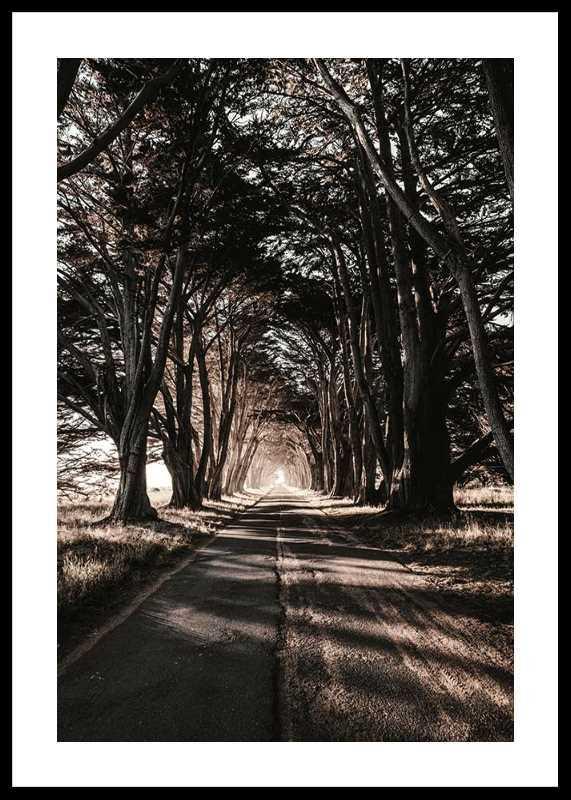 Road Amidst Trees-0