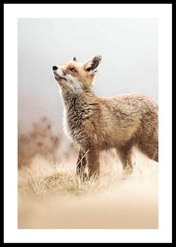 Fox On The Hunt-0