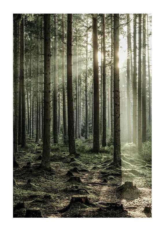 Sunbeam Forest-1