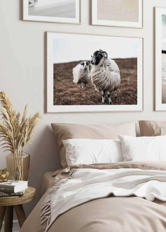 Farm Sheep-4