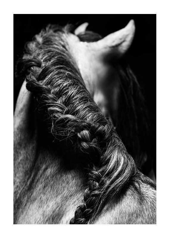 Horse Mane-1