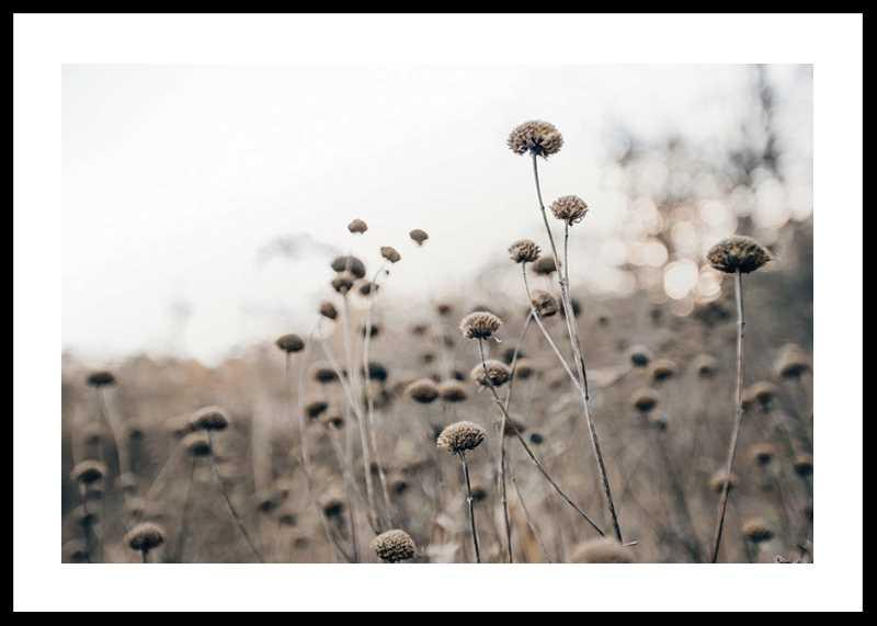 Monochromatic Flowers-0