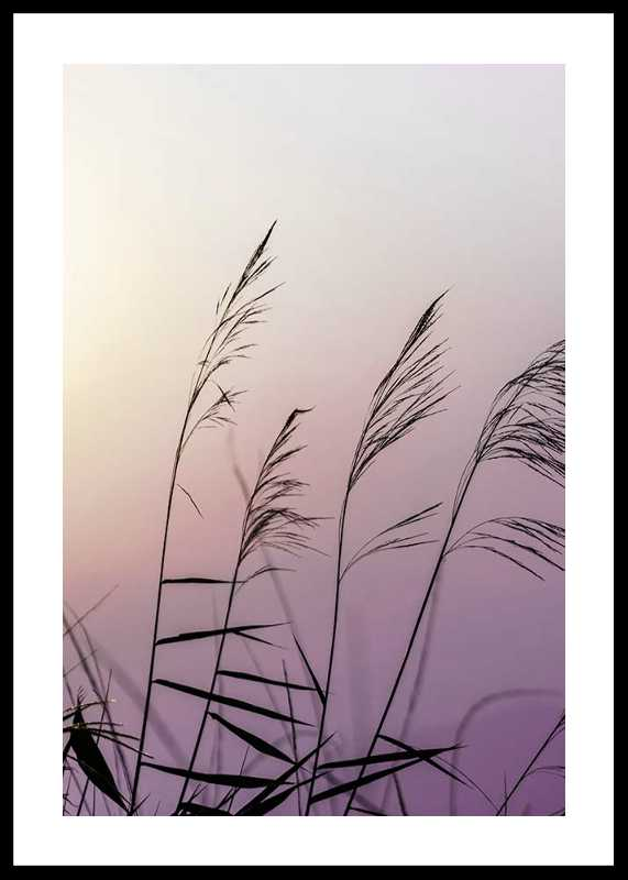 Weeds In Sunset