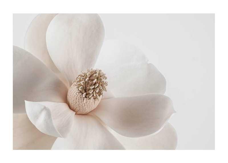 Beige Magnolia No1-1
