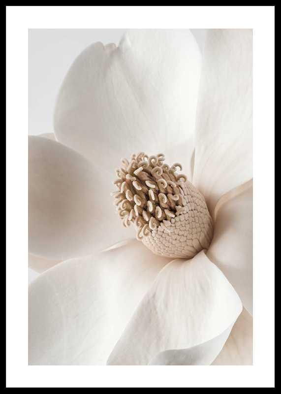 Beige Magnolia No2-0