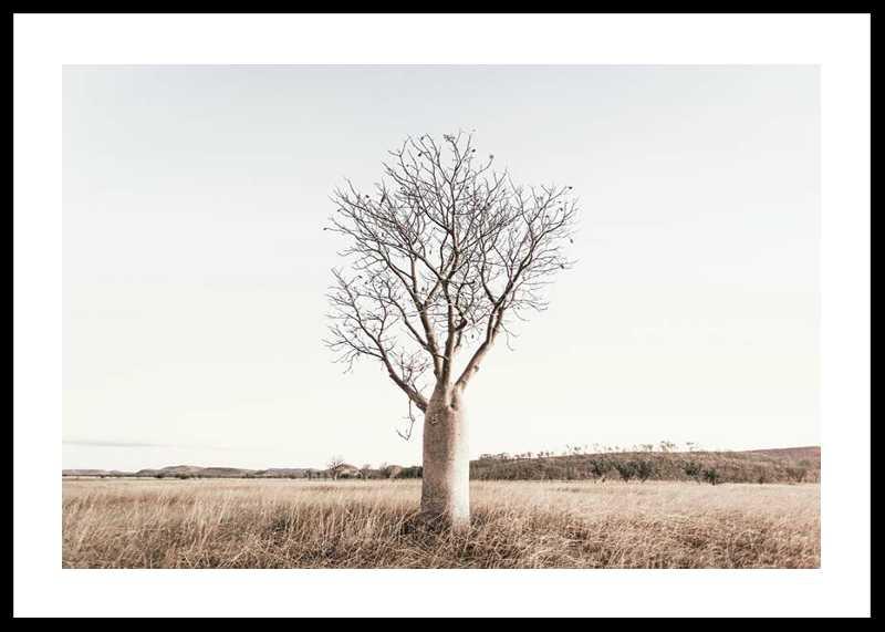 Boab Tree-0