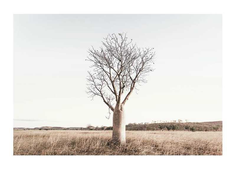 Boab Tree-1